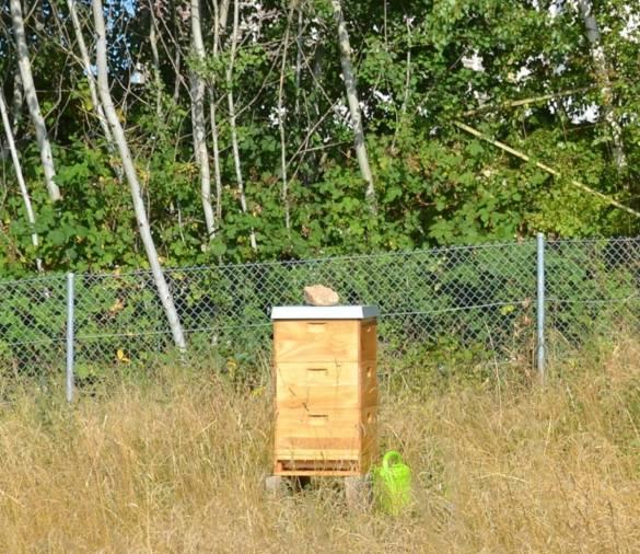 Der Bienenstock auf dem Gelände des Küchengartens Kloster Haydau