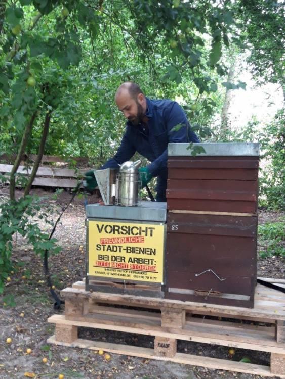 Fleißige Tiere: In den ersten Wochen haben die 50 000 Bienen bereits etwa 30 Kilogramm Honig produziert. Imker Victor Hernandéz hat übrigens Bienenvölker im gesamten Stadtgebiet, unter anderem auf dem Dach des Kasseler Staatstheaters und im Botanischen Garten. Foto: Daniela Hanne