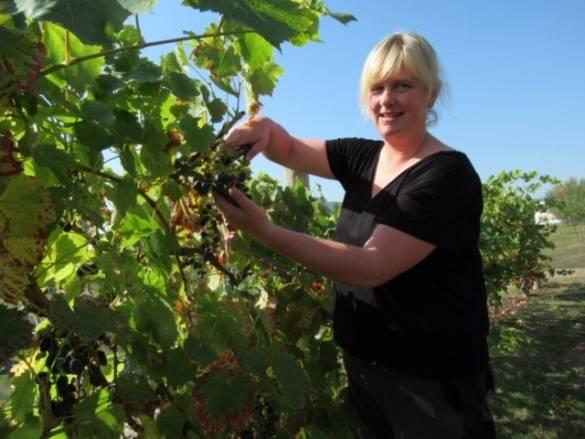 Kerstin Beck bei der Weinlese Foto: Joachim Kohlhaas